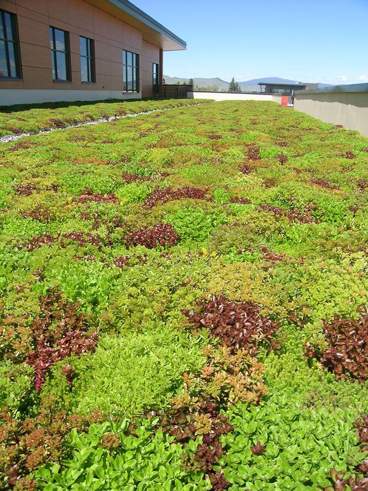 Sedum Green Roof Intermountain Roofscape