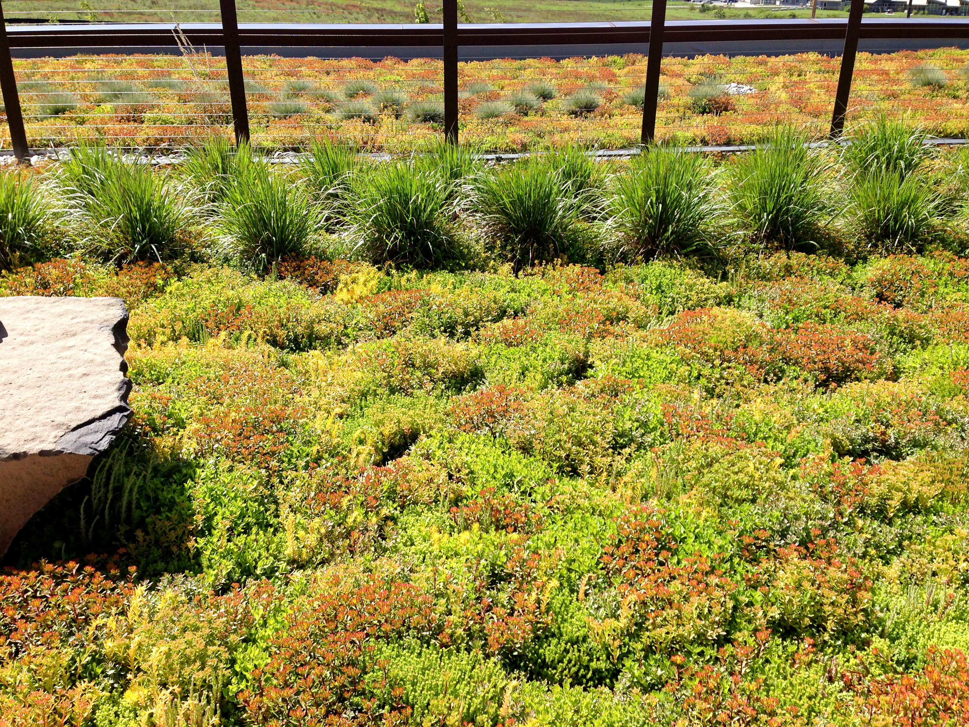 Sedum And Grass Green Roof Intermountain Roofscape