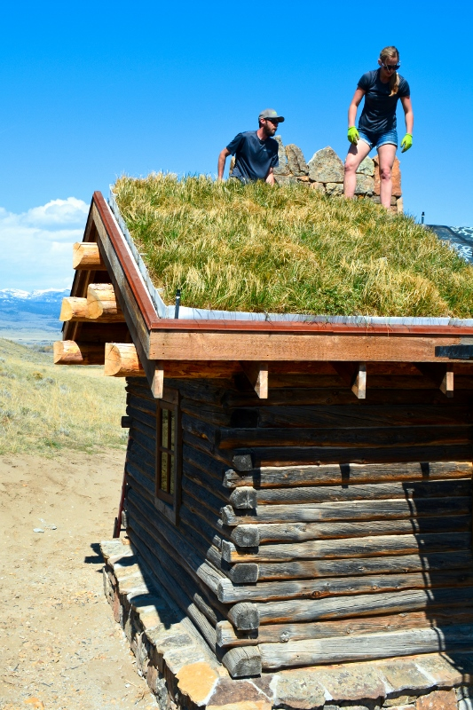 Native Grass Green Roof Intermountain Roofscapes